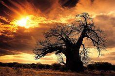 mapungubwe-national-park-