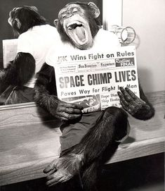 A space chimp poses for the camera after a successful mission to space in 1961.