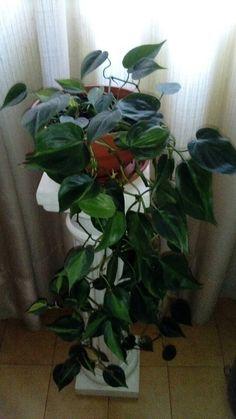 Mis plantas de interior