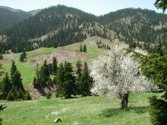 Oiti mountain, Greece