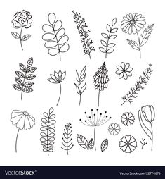 Vector hand drawn collection Herbs and Flowers. Vintage flowers in line style. Simple Flower Drawing, Floral Drawing, Simple Nature Drawing, Flower Outline, Flower Art, Vine Drawing, Drawing Art, Wildflower Drawing, Botanical Line Drawing