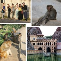 Effect of Technology on #Rajasthan_Tourism  With the growth of Online #travel industry every information is available on fingertips. #Rajasthan one of most visited destination had in depth information available online to facilitate its visitors.  People visit Rajasthan from #Delhi with a Delhi car rental. #Rajasthan is blessed with several tourist charms. Travelers can pick any of them as per their traveling plan.