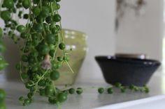 Steal This Look: Miss Havisham's House Plants: Gardenista