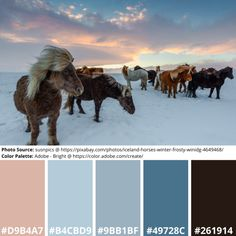 Science Art, Science Nature, Adobe Color Wheel, Color Palette Generator, Icelandic Horse, Online Coloring, Mood Boards, Design Projects, Design Inspiration