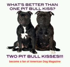 Two Pit Bull Kisses