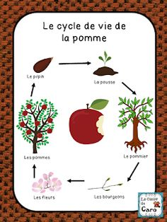 Caro's class - Modern Montessori, French Teacher, Teaching French, Art Lessons Elementary, Elementary Schools, Learn French, Learn English, Tree Life Cycle, Apple Life Cycle
