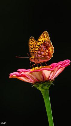 Butterfly by Adrie Gaarenstroom Butterfly Flowers, Butterfly Design, Beautiful Butterflies, Beautiful Flowers, Miss My Mom, Blue Morpho, Art Inspiration Drawing, Bellisima, Textile Art