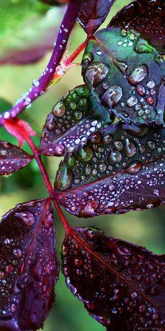 Flowers photography nature rain drops New ideas Dew Drops, Rain Drops, Water Photography, Amazing Photography, Photographie Macro Nature, Foto Macro, Fotografia Macro, Water Droplets, Flowers Nature