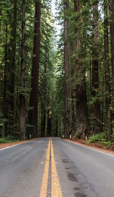 The Avenue of the Giants is America's most peaceful drive on Roadtrippers