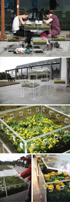 Plexiglass containers planted with sedums and annuals.