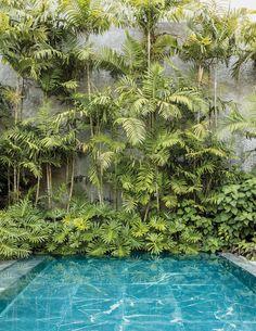 Now, an Artist Is Rethinking One of His Ho… Oscar Niemeyer Defined Modern Brazil. Now, an Artist Is Rethinking One of His Houses. – The New York Times Tropical Garden Design, Tropical Backyard, Backyard Pool Landscaping, Backyard Pool Designs, Tropical Landscaping, Modern Landscaping, Landscaping Ideas, Oscar Niemeyer, Modern Landscape Design