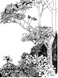 Plein Air Pen and Ink Drawings – Drawing The Motmot Jungle Drawing, Nature Drawing, Forrest Drawing, Jungle Coloring Pages, Forest Sketch, Tree Sketches, Tinta China, Pen Sketch, Landscape Drawings