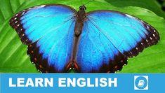 Angol kifejezések egy percben videó lecke. Nézzük meg, mit jelent ez az angol kifejezés: Butterflies in Your Stomach, és hogyan használjuk a hétköznapi angol beszédben.