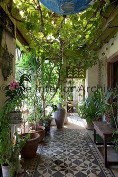 Garden room filled with plants + Photographs By: James Fennell for the book Irish Country House. I would love to have a garden room! Outdoor Rooms, Outdoor Gardens, Outdoor Living, Indoor Outdoor, Indoor Balcony, Small Gardens, Outdoor Seating, Patio Interior, Interior And Exterior