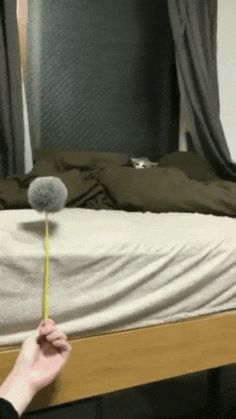 Kitty attacking a Pom Pom (you may have to click on the link and ho on the website to view it as a gif)