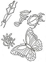 Coloring Page Butterflies for our tree Pinterest Coloring