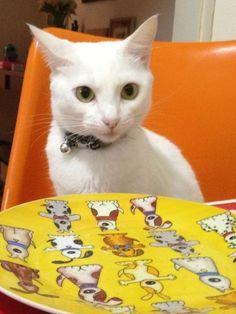 Hello Kitty. Sempre com fome.