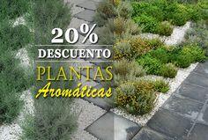 ¡Aromas para tu cocina! 20% de descuento en plantas aromáticas http://jardineriakuka.com/789-plantas-arom%C3%A1ticas-y-culinarias