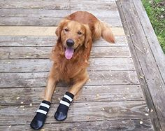 Beingdogs.com | All Weather Neoprene Paw Protector Dog Boots with Reflective Velcro Straps | #dogshoes #beingdogs