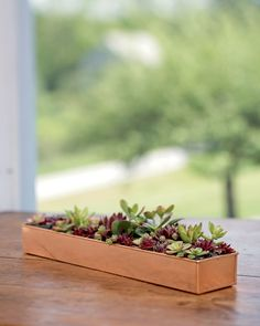 At deep and wide, our copper-coated plant tray helps you create a windowsill dish garden or centerpiece with succulents and other small plants. Aquaponics Greenhouse, Aquaponics Fish, Aquaponics System, Herb Planters, Indoor Planters, Indoor Gardening, Succulent Containers, Fall Planters, Metal Planters