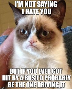 102 Best Grumpy Cat Memes Images In 2019 Grumpy Cat Cat