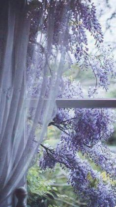 "rosiesdreams: ""Wisteria through the window """