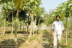 Gudivada Nagaratnam Naidu, an engineer by education, left his high paying job in the city and decided to go back to his roots and take up farming. He cultivates Paddy, Groundnuts, Papaya, fruits, flowers and vegetables in his 20 acre farm near Hyderabad. He has set the national record for paddy and groundnut yields and has trained more than 50,000 students in the farming practices. Take this moment to express your gratitude to such farmers by taking the #ThankYouTohBol Pledge Now!