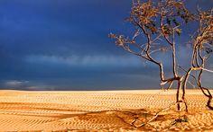 free screensaver wallpapers for desert Desert Pictures, Wallpaper Downloads, Nature Wallpaper, Explore, Outdoor Decor, Plants, Screensaver, Wallpapers, Free