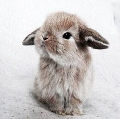 Omg u guys this is the cutest baby bunny everawww
