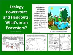 Ecology PowerPoint and Handouts:  What's in an Ecosystem? - FREE