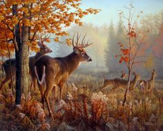 Whitetail deer painting by Greg Alexander
