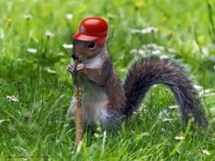 We need that rally squirrel!