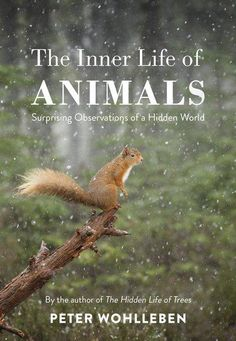 A beguiling book about our deep connection with the natural world in all its incarnations, from the author of The Hidden Life of Trees.