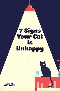 Want to know if your cat is happy? Check out these 7 signs your cat is unhappy. Cat Care Tips, Pet Care, Pet Tips, Kittens Cutest, Cats And Kittens, Chesire Cat, Cat Info, Cat Hacks, Kitten Care