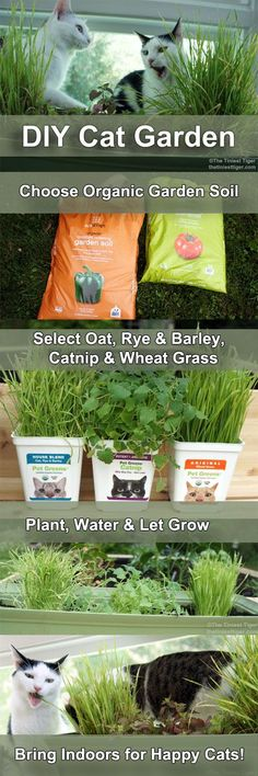 Bring a taste of the outdoors to your indoor only cats with a #DIY Cat Garden. Super easy and your cats will love it! #cats #catcare #BlogPawsDIY