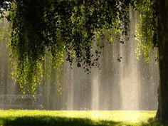 """sixpenceee: """" A sunshower or sun shower is a meteorological phenomenon in which rain falls while the sun is shining. A sunshower is usually the result of accompanying winds associated with a rain. Nature Aesthetic, Aesthetic Plants, All Nature, Autumn Nature, Nature Tree, Flowers Nature, Parcs, Pretty Pictures, Aesthetic Pictures"""