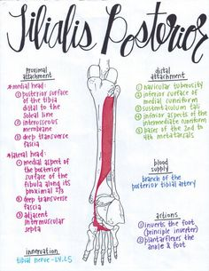 Erase Foot and Ankle Pain with 8 Easy Exercises · MoveFitDoc Muscle Anatomy, Body Anatomy, Anatomy Study, Ankle Anatomy, Muscular System Anatomy, Gross Anatomy, Medical Anatomy, Human Anatomy And Physiology, College Hacks