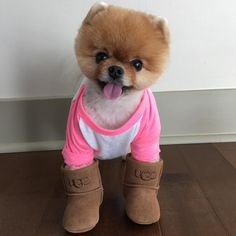 See this Instagram photo by @jiffpom • 114.7k likes