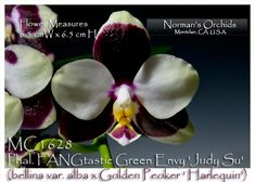 Fangtastic Su Dudy Phal Green Envy | click on thumbnail to zoom