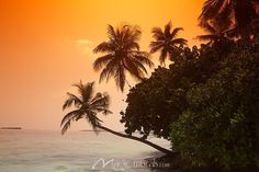 Palm Tree Sunset by Massimo Pizzotti, a wall mural from Magic Murals. Every 1 of our thousands of wallpaper murals can be custom sized to your specs. Tree Sunset Wallpaper, Wall Wallpaper, Palm Tree Sunset, Palm Trees, Beach Pictures, Beach Pics, Crop Tool, Crop Image, Beach Shack