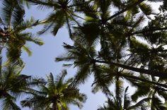 Alibag Palms Palms, Mumbai