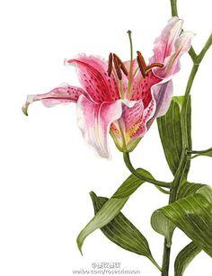 #botanical art# by Anna Mason