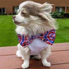 Labrador Lab Puppy Dog Bachelor Bow Tie Satin Chrome Plated Metal Money Clip