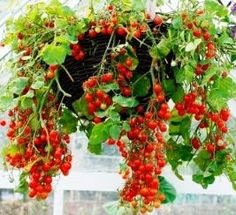 Container gardening THE BEST SITE FOR SHOWING WHAT TO GROW AND THE SIZE OF CONTAINER NEEDED.