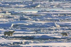 Greenland ..