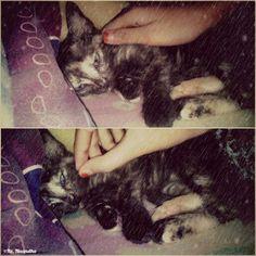 Time too sleeptight   ..  My cats look soo tired now  *nice Dream ..