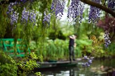 Finding Solitude at Monet's Gardens - NYTimes.com