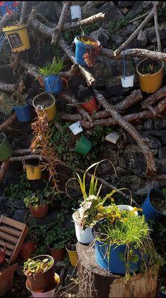 Chen, Plants, Flora, Plant