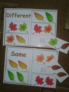 Same or Different Sorting -Autism & Special Needs Activity, for more resources follow https://www.pinterest.com/angelajuvic/autism-special-education-resources-angie-s-tpt-sto/