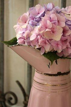 Hydrangea - enamel pitcher. My Flower, Fresh Flowers, Pretty In Pink, Flower Power, Beautiful Flowers, Hortensia Hydrangea, Hydrangea Garden, Pink Hydrangea, Deco Floral